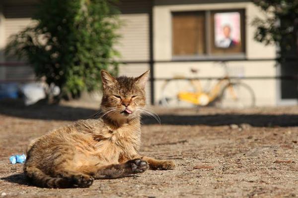 日曜日のネコたちへ。その2 サビ