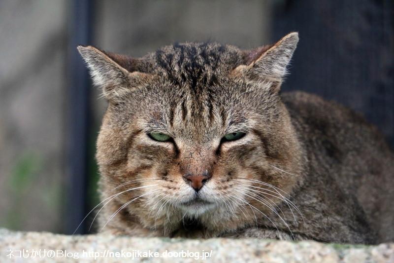 2015090509猫はココにいる。3