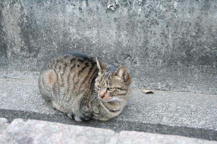 2005年、お世話になったネコたち。緑道ネコ