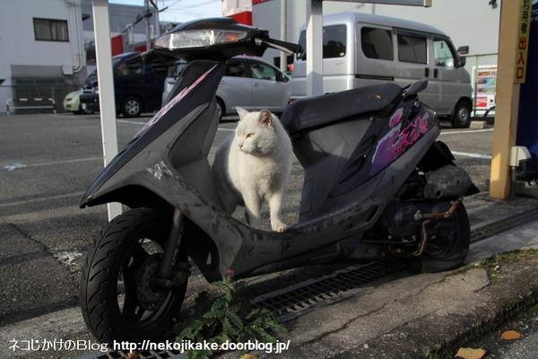 2013122801イケてる白ネコ。