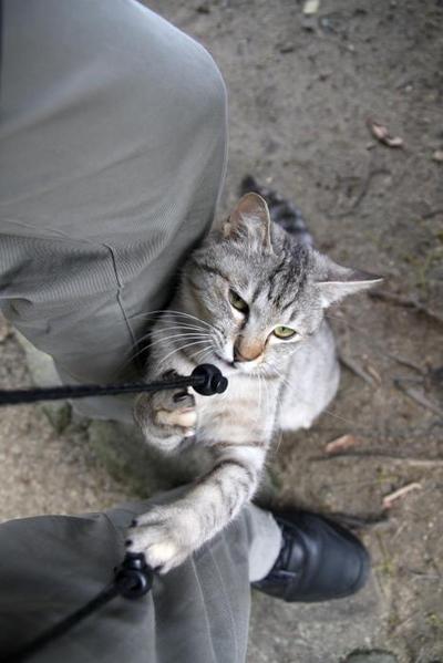 にゃんにゃんにゃん、でネコの日。その3 みこ2