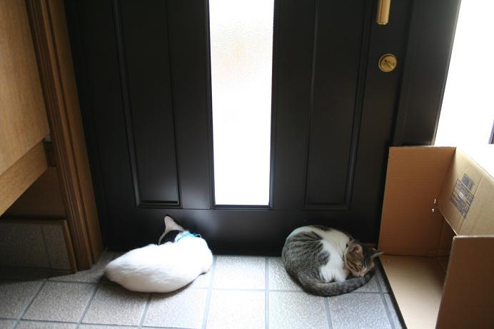 猛猫注意。