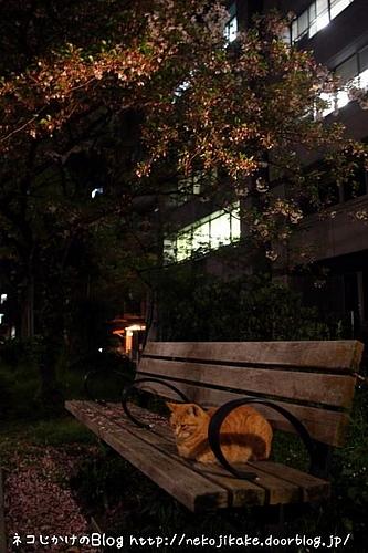 夜のベンチ。