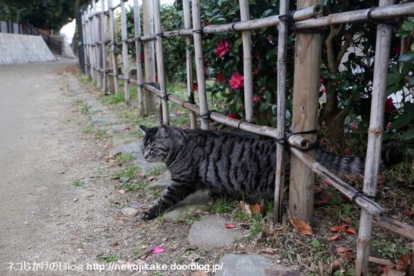 2017010112行く猫来る猫。1