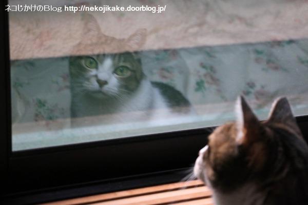 2016120902窓際のシマちゃん。2