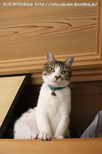 ネコを天袋に押し込んで。