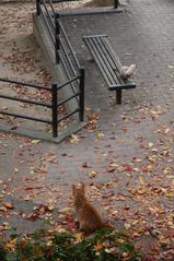 秋深き・・・。
