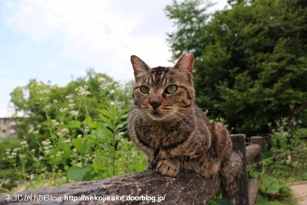 2016060908猫はあくびをして喜ばれる。2