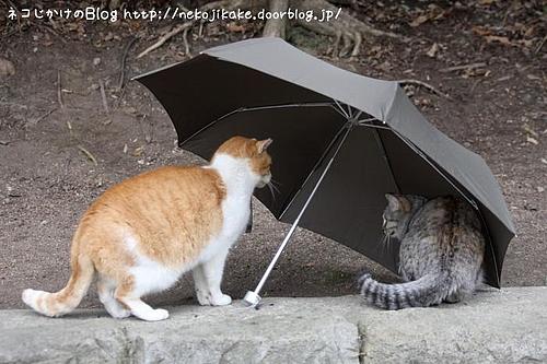 相合い傘。