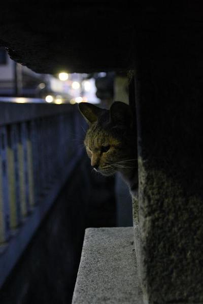 秋の夜長は。 サビ