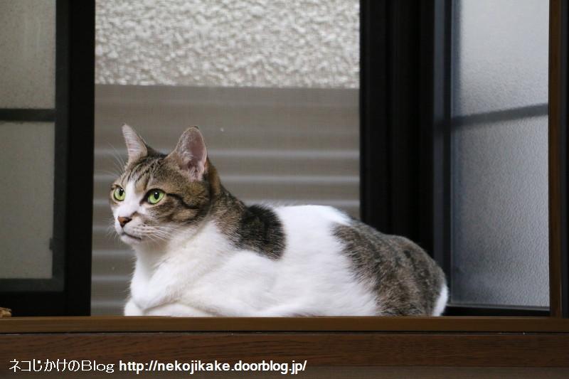 2017090604出窓の猫。2