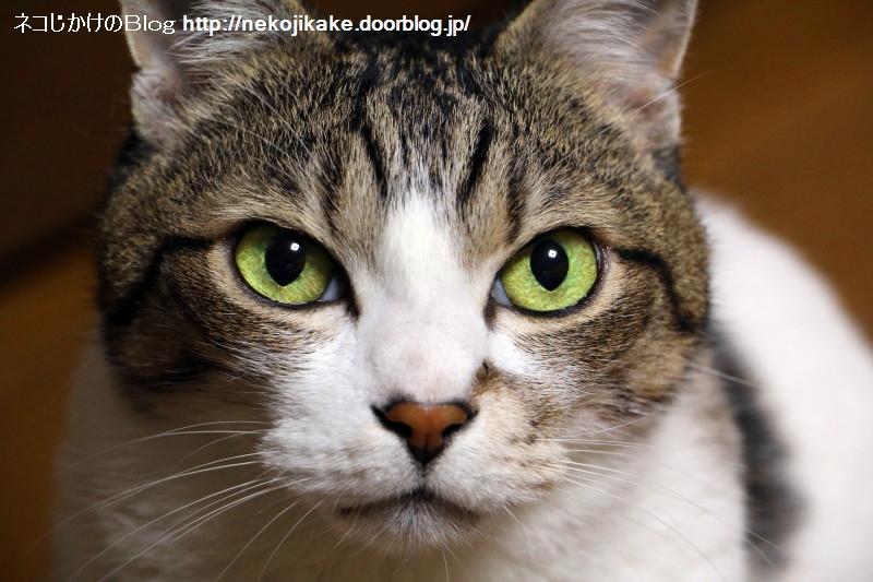 2016052703猫の顔をじっくり眺める。