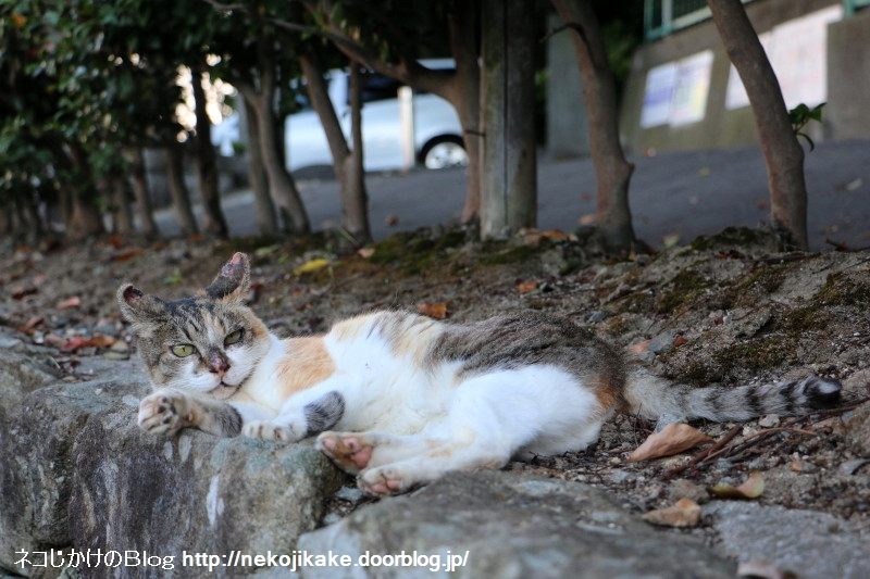2015071408納涼 外猫の場合。2