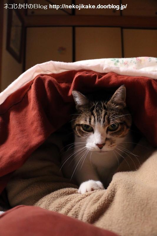 2016121403猫の布団。