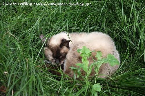 草のベッド。
