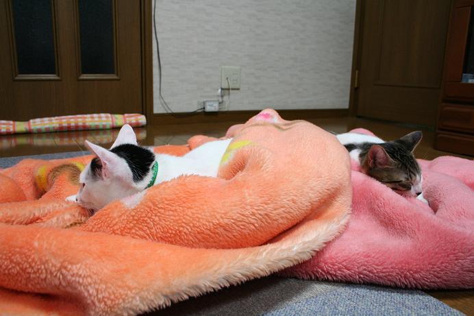 毛布はいりまーす。