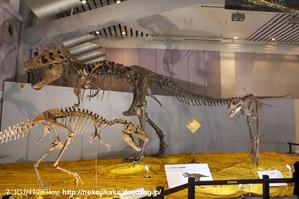 2017073008メガ恐竜展201@ 大阪南港ATCホール。6