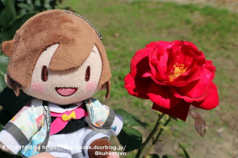 2021053006真っ赤なバラが似合う女。