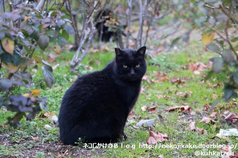 2020010308漆黒の猫。