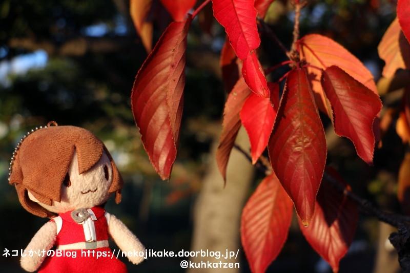 2020110904葉も赤く染まる。
