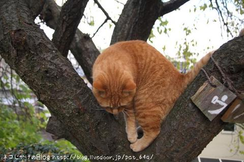 木登り。 ちび