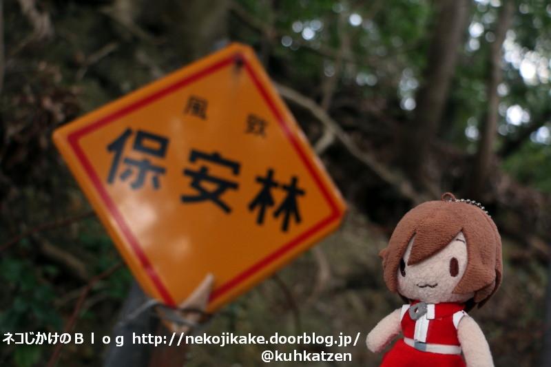 2020013106森林を守りましょう。