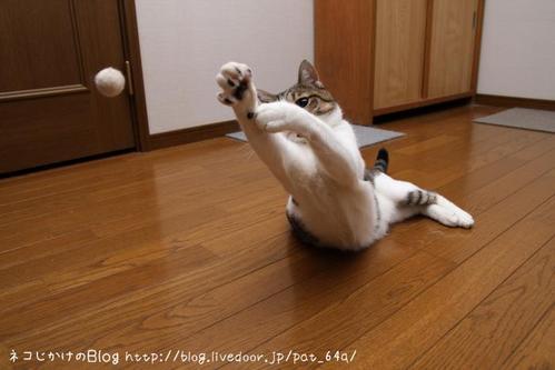 ボールを追って。 シマ