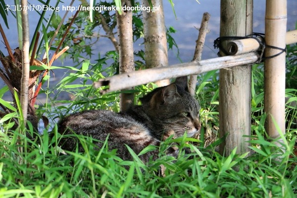 2016052215猫だってカラスだって。3