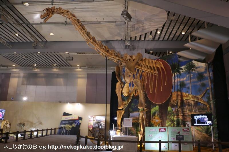2017073017メガ恐竜展201@ 大阪南港ATCホール。15