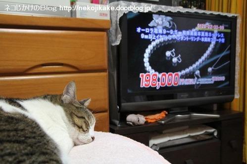 2013060501猫に真珠。
