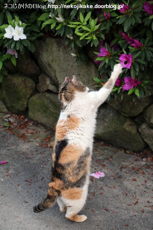 2015042202花を愛でる。1