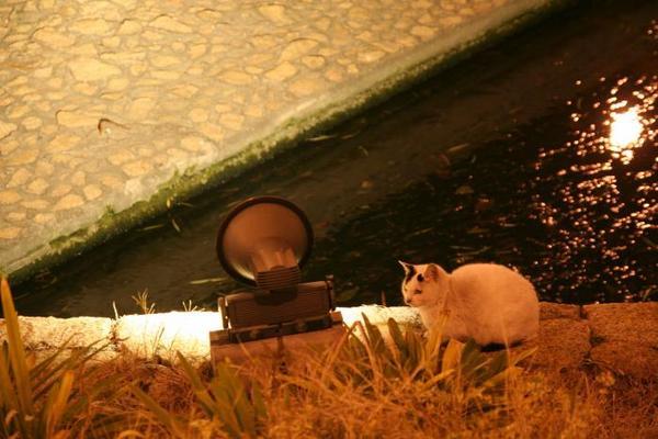 温まりたい。白黒ネコ