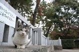 2005年、お世話になったネコたち。サバ白