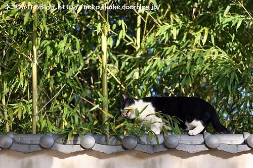 白黒で笹を食べる動物。