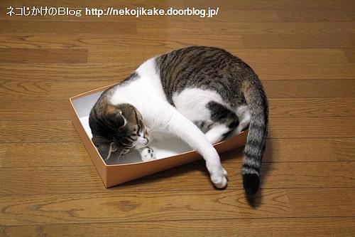 箱に入って狙うもの。