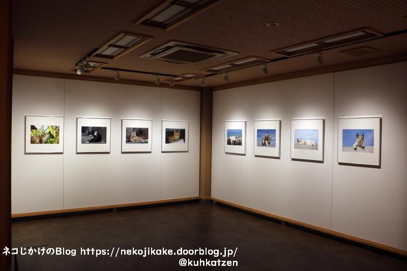 2020102516写真展「fractale」・「Cat・Cat」@京都写真美術館_ギ4