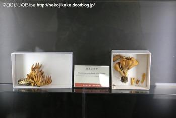 2018102108きのこ!キノコ!木の子!@大阪市立自然史博物館。4