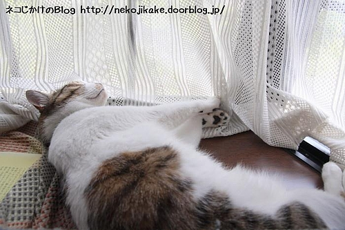 窓辺で昼寝。