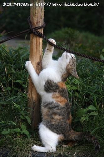 ロープ異常なし!