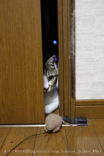 部屋の扉を開けて。その2 シマ