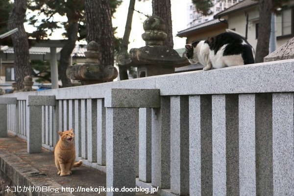 2016011607神社の猫たち。3
