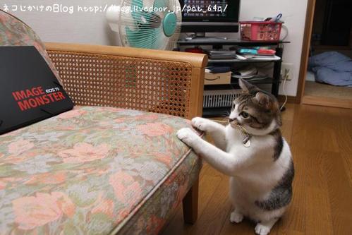 IMAGE MONSTER その3 シマ