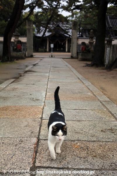 2015122103師走のネコたち。2