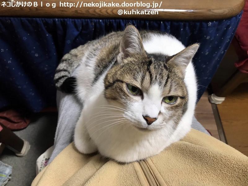 2020012306猫がいる暮らしはいいものだ。
