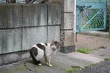 池のそばのネコたち。その7