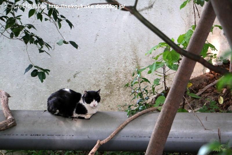2015060203くつろぎの猫。2
