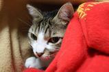 毛布の中。シマ1