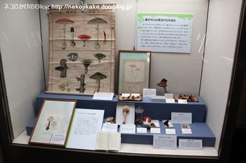 2018102110きのこ!キノコ!木の子!@大阪市立自然史博物館。6