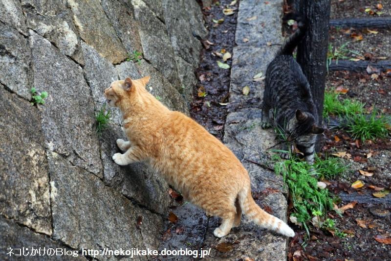 2015041003雨中猫あり。2