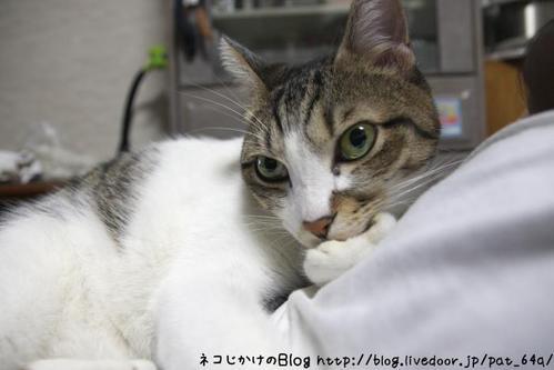 考えるネコ。 シマ